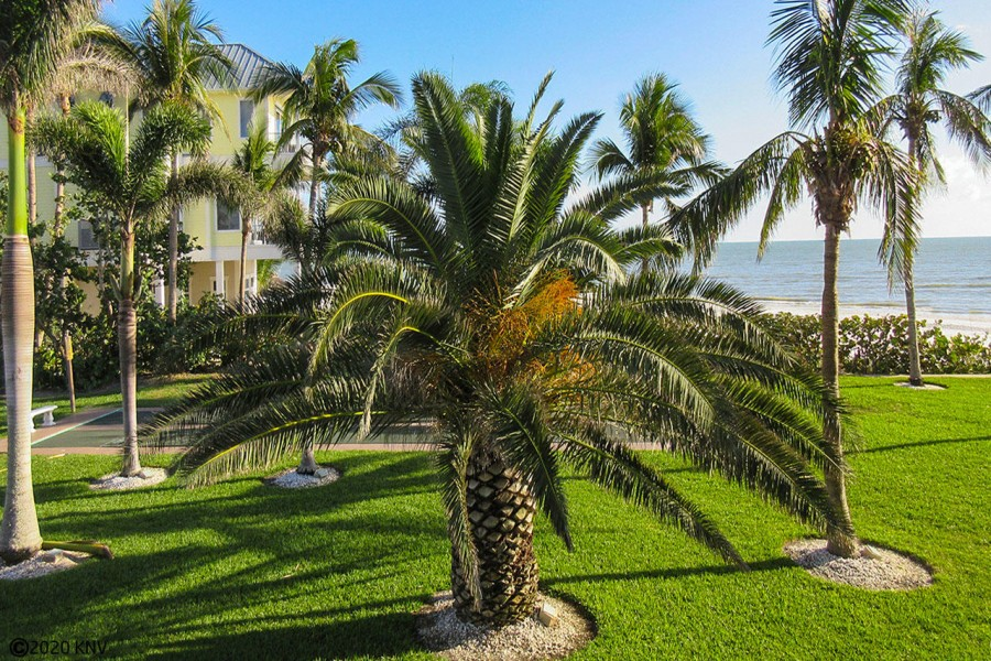 Tropical landscaping surrounds Smugglers Cove