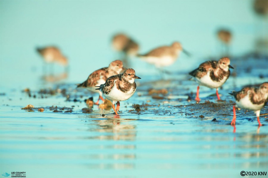 Fort Myers Beach...snowbirds